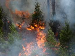 Wildfire Honey by Images Of This Year U0027s Devastating Wildfire Season Business Insider