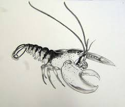 lobster drawing coastal ecosystems course maine college of art
