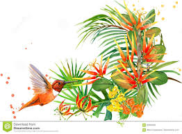 jungle plant bird and flowers hummingbird rain forest