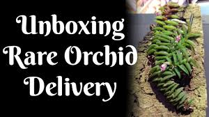 unboxing rare orchid delivery youtube