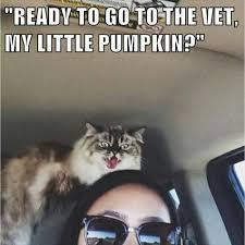 Vet Memes - ready to go to the vet