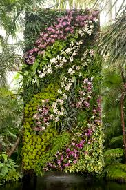 patrick blanc vertical garden of orchids at new york botanical