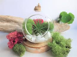 pink and green air plant terrarium kit minimalist hanging glass