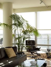 living room trees palm leaves living room contemporary with potted plants