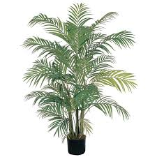 4 foot areca palm tree potted 5001