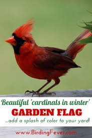 lovely u0027cardinals in winter u0027 garden flag gardens flags and