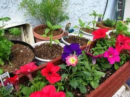 57 best container gardening ideas for you images on pinterest