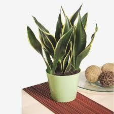 house plants that don t need light bathroom bathroom low light houseplants plants that don t require