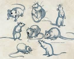 drawn rat creepy pencil and in color drawn rat creepy