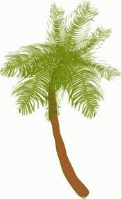clipart coconut tree