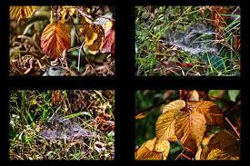 Bad Grund Impressionen Aus Dem Weltwald Bei Bad Grund Foto U0026 Bild
