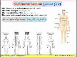 Picture Of Anatomical Position 04 Anatomical Terms 1 Anatomical Position U0026 Planes Anatomy Intro