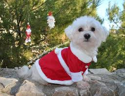 remodelaholic 12 diy christmas gifts for pets