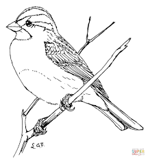 sparrow bird coloring page kids drawing and coloring pages