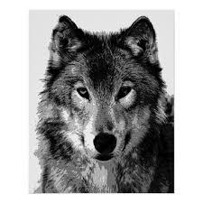 grey wolf poster print zazzle com