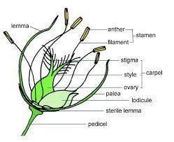 Style Flower Part - flower anatomy