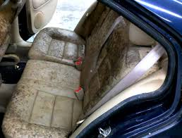 home remedies for cleaning car interior treat and prevent mold and mildew in home and cars