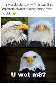 America Eagle Meme - finally understand why american bald eagles are always photographed