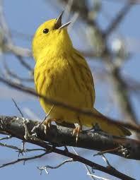 Colorado Birds images Chatfield bird list audubon society of greater denver jpg