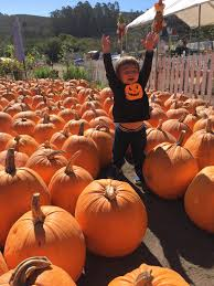 Half Moon Bay Pumpkin Festival by Top 10 Things To Do This Fall In The San Francisco Bay Area With
