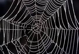 halloween spider web background yellowstone u0027s photo collection