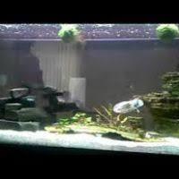 wars fish tank decor hondurasliteraria info
