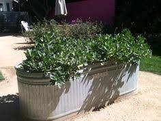 Galvanized Trough Planter by Galvanized Water Trough Made Into A Table Imagine It With A