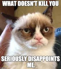 Grumpy Meme - grumpy cat reverse meme imgflip