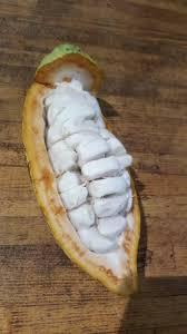 feve cuisine fève de cacao picture of la maison du cacao pointe
