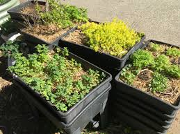 Ideas For School Gardens Lesson Ideas To Use In Your School Garden For Stem
