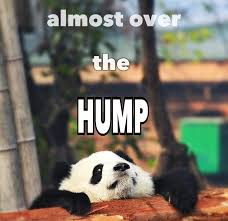 Hump Day Meme Funny - couldn t resist this funny silly cute kawaii wednesday humpday baby