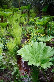 546 best bog plants and water gardens images on pinterest water
