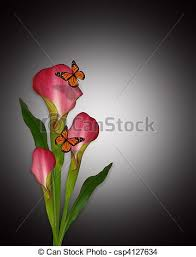 calla lilies and butterflies image and illustration drawing
