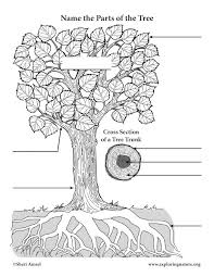 label the parts of a tree