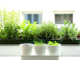 window herb harden window herb garden window herb garden kit kits for hydroponic