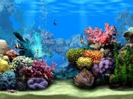 Reef Aquascape Designs Aquascape Design Ideas Android Apps On Google Play