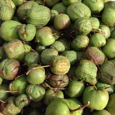 plants native to new england call to action hardy kiwi may be illegal to grow in new england