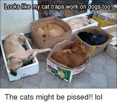 Cat Trap Meme - looks like my cat traps work on dogs too the cats might be pissed