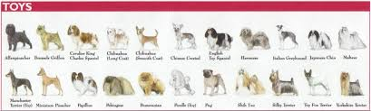 affenpinscher coat type the 7 dog breed groups explained american kennel club