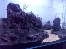 Mountain Aquascape Help Me With My 1st Aquascaping Aquascaping World Forum