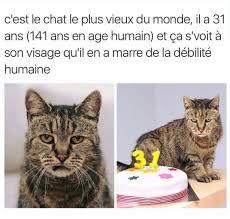 Meme Chat - chat blasé meme by drdreamingsheep0 memedroid