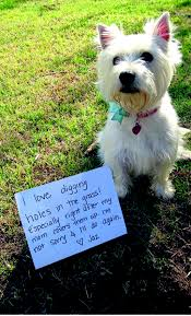 stop dogs from digging news24