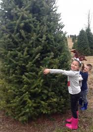 new jersey christmas tree farms where do you go jersey family fun