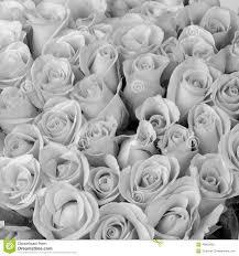 bouquet de fleurs roses blanches bouquet de fleur de rose couleur et blanche photo stock