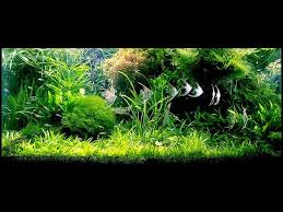 Amano Aquascaping 107 Best Takashi Amano Godfather Of The Nature Aquarium Nature