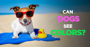 Are All Dogs Colour Blind Dogs See Colors Or Are They Completely Color Blind
