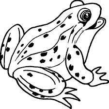 amphibian happy frog coloring wecoloringpage