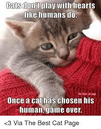 Cats Memes - cats play with hearts like humans do the best cat page once a cat