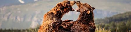 alaska bear viewing tours lists the best tours around the state