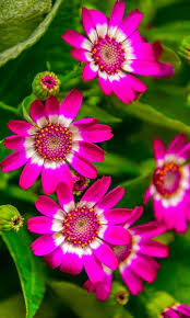 Pretty Plants by 1668 Best Flowers Images On Pinterest Pretty Flowers Plants And